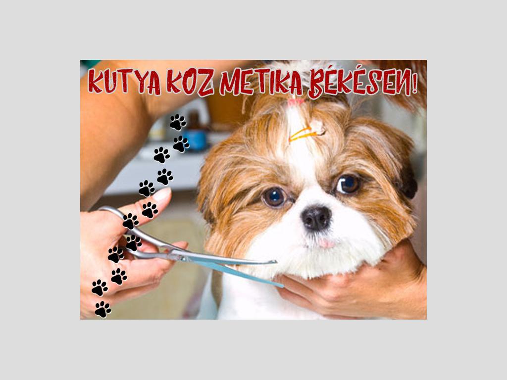 Kutyakozmetika Békés